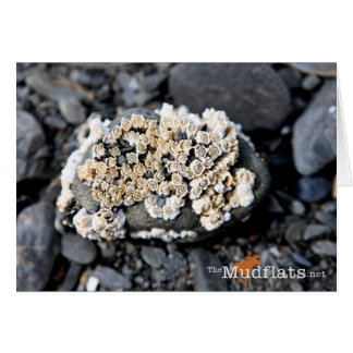 Alaskan Barnacle Card