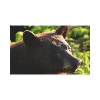 Alaskan Bear ..Up close and Personal Canvas Print