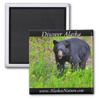 Alaskan Black Bear Square Magnet