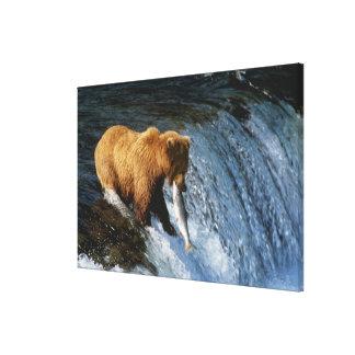 Alaskan Brown Bear Catching Salmon at Brooks Canvas Print
