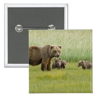 Alaskan Brown Bear Sow and three Cubs, Ursus 15 Cm Square Badge