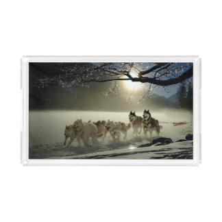 Alaskan Husky Dog Sled Race Acrylic Tray