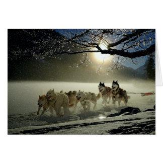 Alaskan Husky Dog Sled Race Card