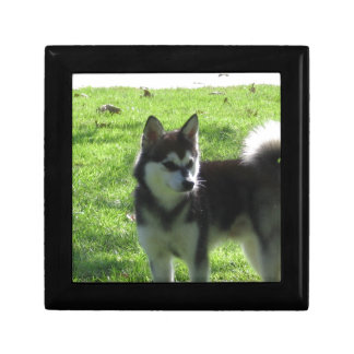 Alaskan Klee Kai Dog Gift Box