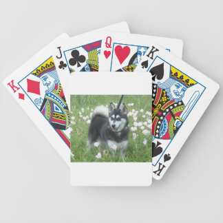 Alaskan Klee Kai Dog Plays In The Tulips Bicycle Playing Cards