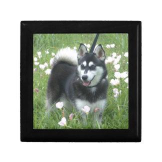 Alaskan Klee Kai Dog Plays In The Tulips Gift Box