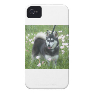 Alaskan Klee Kai Dog Plays In The Tulips iPhone 4 Case-Mate Cases