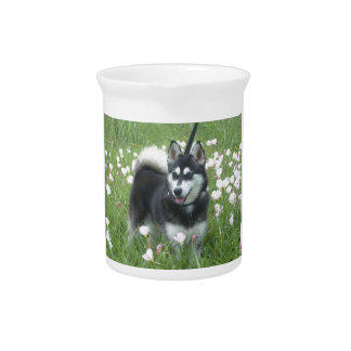 Alaskan Klee Kai Dog Plays In The Tulips Pitcher
