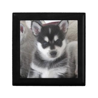 Alaskan Klee Kai Puppy Dog Gift Box