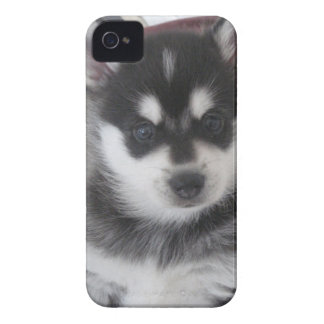 Alaskan Klee Kai Puppy Dog iPhone 4 Case-Mate Case