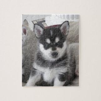 Alaskan Klee Kai Puppy Dog Jigsaw Puzzle
