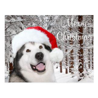 Alaskan Malamute Christmas Postcard
