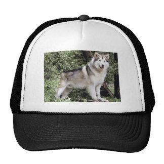 Alaskan Malamute Dog Cap