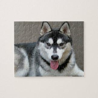 Alaskan Malamute Dog Photograph Puzzles