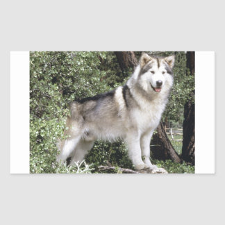 Alaskan Malamute Dog Rectangular Sticker