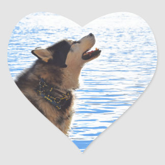 Alaskan Malamute Heart Sticker
