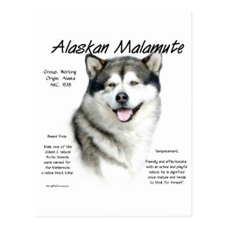 Alaskan Malamute History Design Post Card