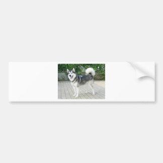Alaskan Malamute Puppy Dog Bumper Sticker