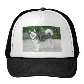 Alaskan Malamute Puppy Dog Cap