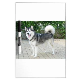 Alaskan Malamute Puppy Dog Dry Erase Board