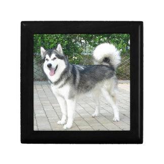 Alaskan Malamute Puppy Dog Gift Box