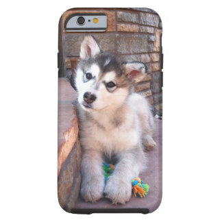 Alaskan Malamute Puppy Head Tilt Photograph Tough iPhone 6 Case