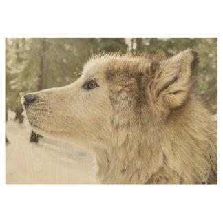 Alaskan Malamute Wood Poster