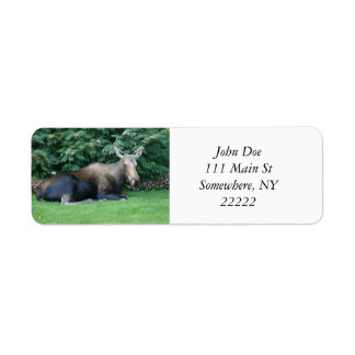 Alaskan Moose Return Address Label