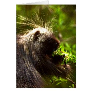 Alaskan Porcupine Card