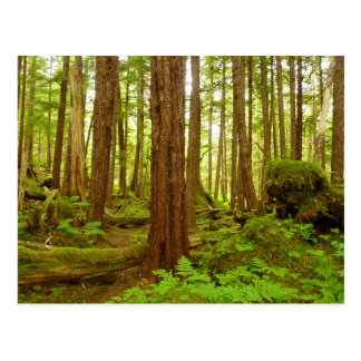 Alaskan Temperate Rainforest Postcard