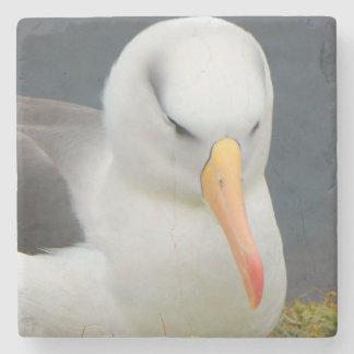 Albatross Bird off the coast of New Zealand Stone Coaster
