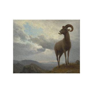 Albert Bierstadt (1830–1902) Bighorn Sheep Canvas Print