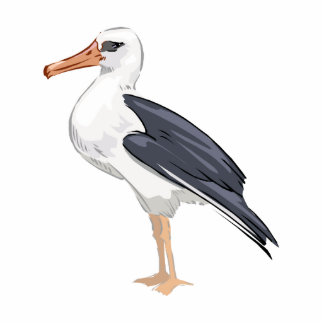 Alberto Albatross Acrylic Cut Out