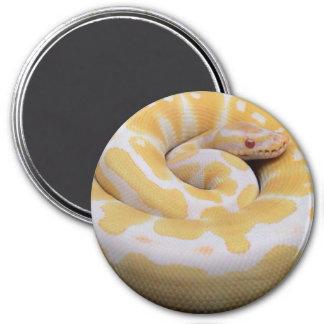 Albino Ball Python Magnet