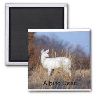 Albino Deer Magnet
