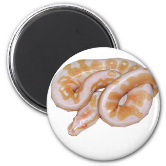 Albino Het Red Axanthic Magnet