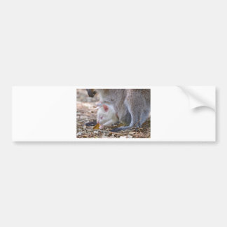 Albino joey in the pocket bumper sticker