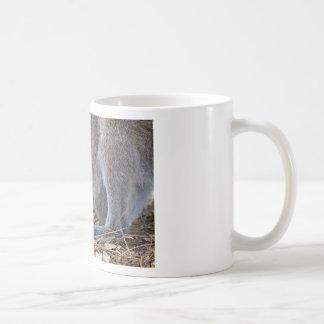Albino joey in the pocket coffee mug