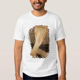 Albino Monacled Cobra, Naja kaouthia, coiled Shirt