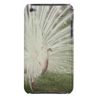 Albino peacock iPod Case-Mate case