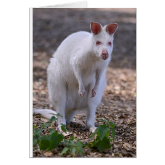 Albino Red-necked wallaby Card