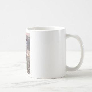Albino Red-necked wallaby Coffee Mug