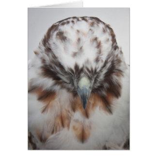 Albino Red-tailed Hawk Card