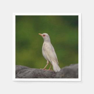 Albino Robin in Crown Point Disposable Serviette