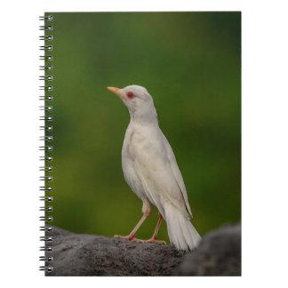 Albino Robin in Crown Point Spiral Notebook
