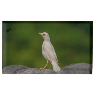 Albino Robin in Crown Point Table Card Holder