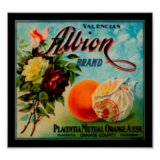 Albion Oranges Produce Crate Label - Poster 2