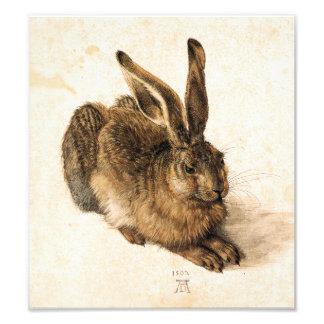 Albrecht Durer Young Hare Photo Art