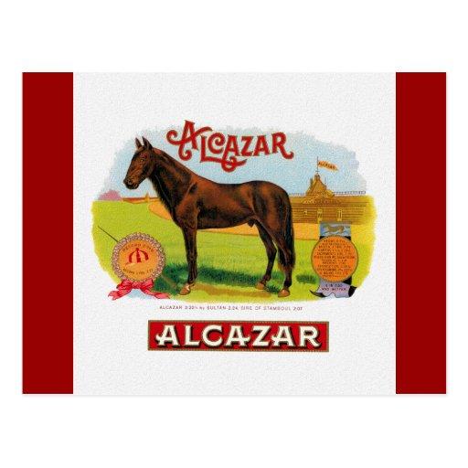 Alcazar the Race Horse Postcard