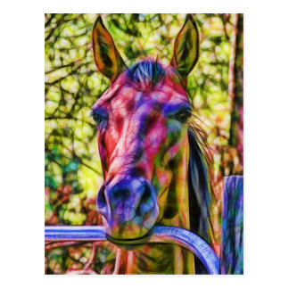Alert horse at gate post card